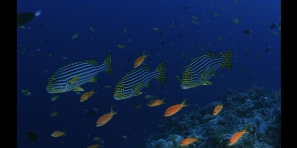 FRESH LUTS underwaterboost FREE LUT