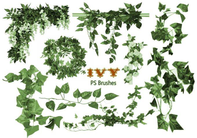 フォトショップ ブラシ Photoshop Brush 無料 イラスト 草 雑草 植物 葉 プランツ 20 Ivy PS Brushes Abr Vol.1