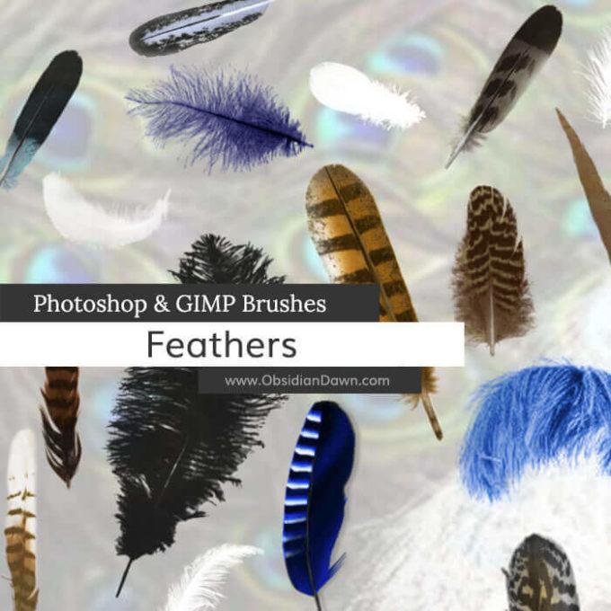 フォトショップ ブラシ Photoshop Bird Brush 無料 イラスト 鳥 バード フォトショップ ブラシ Photoshop Bird Brush 無料 イラスト 鳥 バードフォトショップ ブラシ Photoshop Bird Brush 無料 イラスト 鳥 バード フォトショップ ブラシ Photoshop Bird Brush 無料 イラスト 鳥 バード 羽 フェザー Feathers Photoshop and GIMP Brushes