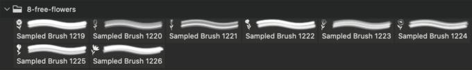 フォトショップ ブラシ Photoshop Brush 無料 Flower イラスト 花 フラワー 8 Free Flower Brushes