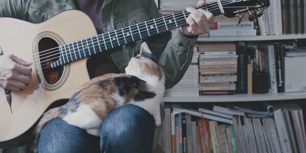 FRESH LUTS Music Clip FREE LUT