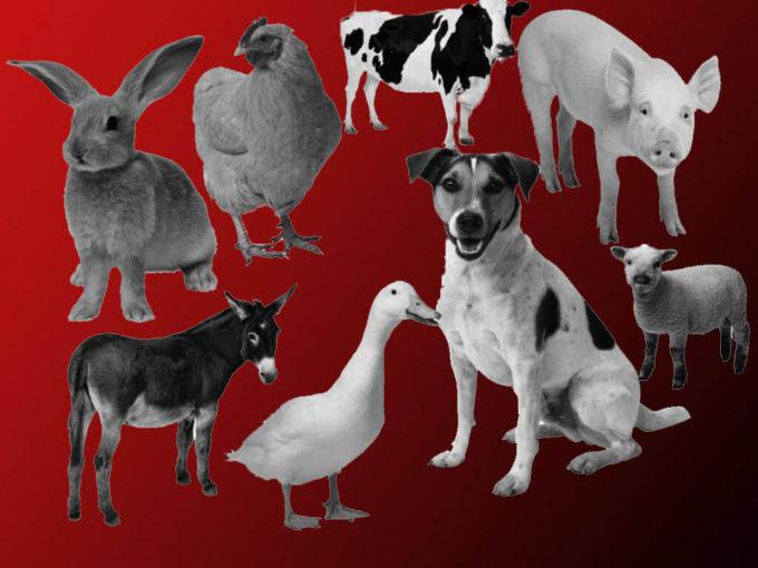 フォトショップ ブラシ Photoshop Animal Brush 無料 イラスト 動物 アニマル シルエット Animal Brushes