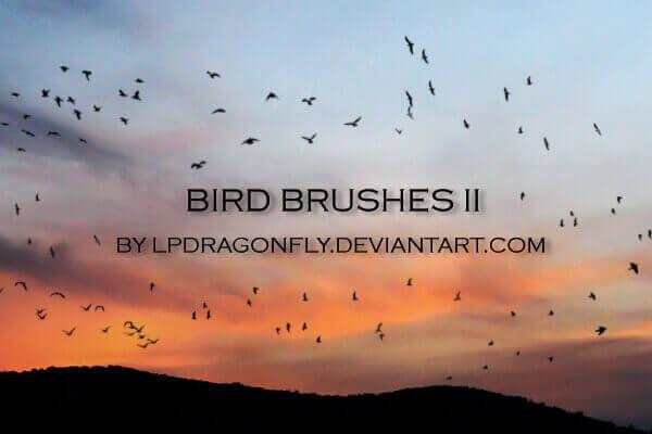 フォトショップ ブラシ Photoshop Bird Brush 無料 イラスト 鳥 バード フォトショップ ブラシ Photoshop Bird Brush 無料 イラスト 鳥 バードフォトショップ ブラシ Photoshop Bird Brush 無料 イラスト 鳥 バード フォトショップ ブラシ Photoshop Bird Brush 無料 イラスト 鳥 バード bird brushes