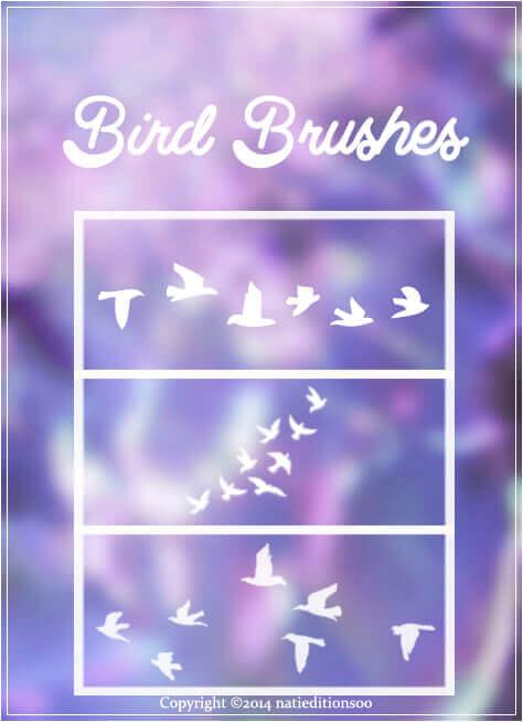フォトショップ ブラシ Photoshop Bird Brush 無料 イラスト 鳥 バード フォトショップ ブラシ Photoshop Bird Brush 無料 イラスト 鳥 バードフォトショップ ブラシ Photoshop Bird Brush 無料 イラスト 鳥 バード フォトショップ ブラシ Photoshop Bird Brush 無料 イラスト 鳥 バード +Bird Brushes