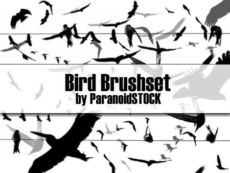 フォトショップ ブラシ Photoshop Bird Brush 無料 イラスト 鳥 バード フォトショップ ブラシ Photoshop Bird Brush 無料 イラスト 鳥 バードフォトショップ ブラシ Photoshop Bird Brush 無料 イラスト 鳥 バード フォトショップ ブラシ Photoshop Bird Brush 無料 イラスト 鳥 バード Bird Brushset