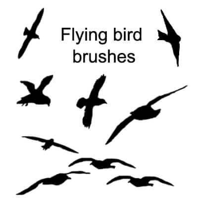 フォトショップ ブラシ Photoshop Bird Brush 無料 イラスト 鳥 バード フォトショップ ブラシ Photoshop Bird Brush 無料 イラスト 鳥 バードフォトショップ ブラシ Photoshop Bird Brush 無料 イラスト 鳥 バード フォトショップ ブラシ Photoshop Bird Brush 無料 イラスト 鳥 バード Bird Shape Brushes