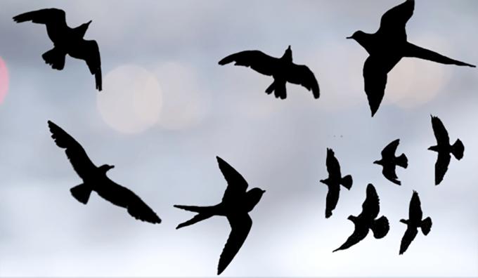 フォトショップ ブラシ Photoshop Bird Brush 無料 イラスト 鳥 バード