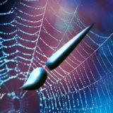 フォトショップ ブラシ Photoshop Spyder Brush クモ 蜘蛛 クモの巣 無料 abr