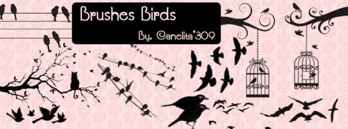 フォトショップ ブラシ Photoshop Bird Brush 無料 イラスト 鳥 バード フォトショップ ブラシ Photoshop Bird Brush 無料 イラスト 鳥 バードフォトショップ ブラシ Photoshop Bird Brush 無料 イラスト 鳥 バード フォトショップ ブラシ Photoshop Bird Brush 無料 イラスト 鳥 バード Brushes Birds By Canelita309