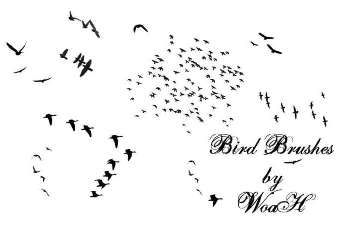 フォトショップ ブラシ Photoshop Bird Brush 無料 イラスト 鳥 バード フォトショップ ブラシ Photoshop Bird Brush 無料 イラスト 鳥 バードフォトショップ ブラシ Photoshop Bird Brush 無料 イラスト 鳥 バード フォトショップ ブラシ Photoshop Bird Brush 無料 イラスト 鳥 バード Flying Bird Brushes