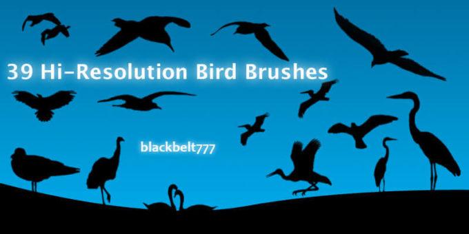 フォトショップ ブラシ Photoshop Bird Brush 無料 イラスト 鳥 バード フォトショップ ブラシ Photoshop Bird Brush 無料 イラスト 鳥 バードフォトショップ ブラシ Photoshop Bird Brush 無料 イラスト 鳥 バード フォトショップ ブラシ Photoshop Bird Brush 無料 イラスト 鳥 バード Hi-Res Bird Brushes