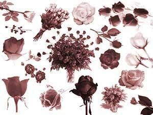 フォトショップ ブラシ Photoshop Brush 無料 Flower イラスト 花 フラワー Roses Brush set
