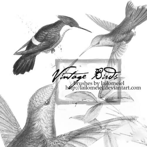 フォトショップ ブラシ Photoshop Bird Brush 無料 イラスト 鳥 バードフォトショップ ブラシ Photoshop Bird Brush 無料 イラスト 鳥 バード フォトショップ ブラシ Photoshop Bird Brush 無料 イラスト 鳥 バード Vintage Birds