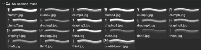 フォトショップ ブラシ 無料 木 モス サルオガセモドキ Spanish Moss Photoshop and GIMP Brushes