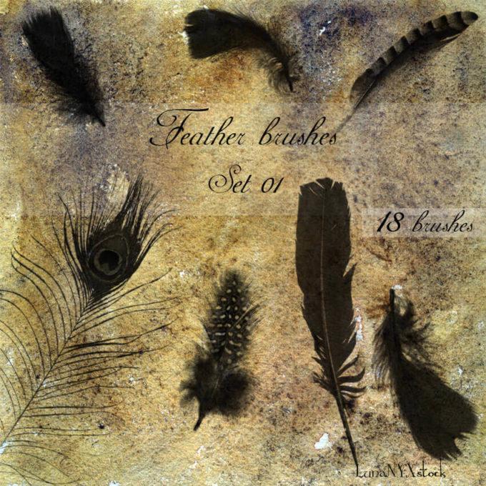 フォトショップ ブラシ Photoshop Bird feather Brush 無料 イラスト 鳥 バード Feather brushes - set 01