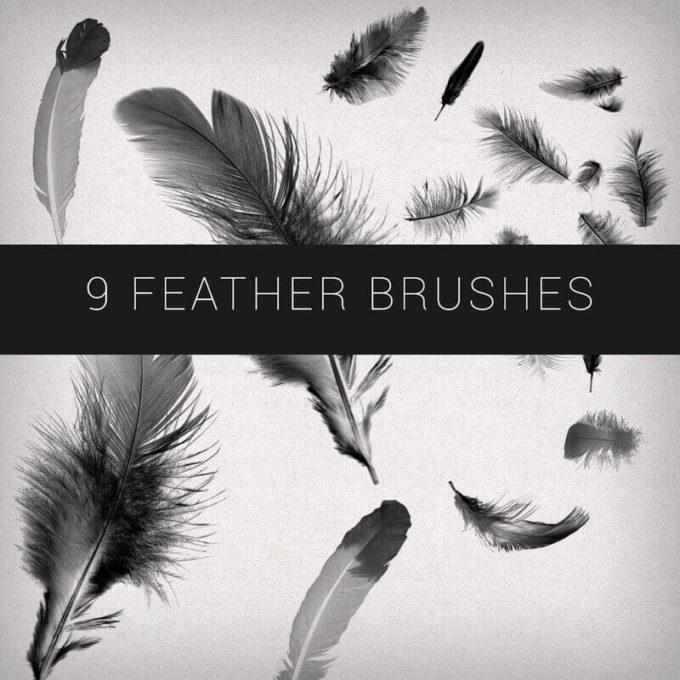 フォトショップ ブラシ Photoshop Bird feather Brush 無料 イラスト 鳥 バード 9 Feathers Brushes