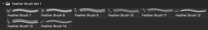 フォトショップ ブラシ Photoshop Bird feather Brush 無料 イラスト 鳥 バード Feather Brush Set 1
