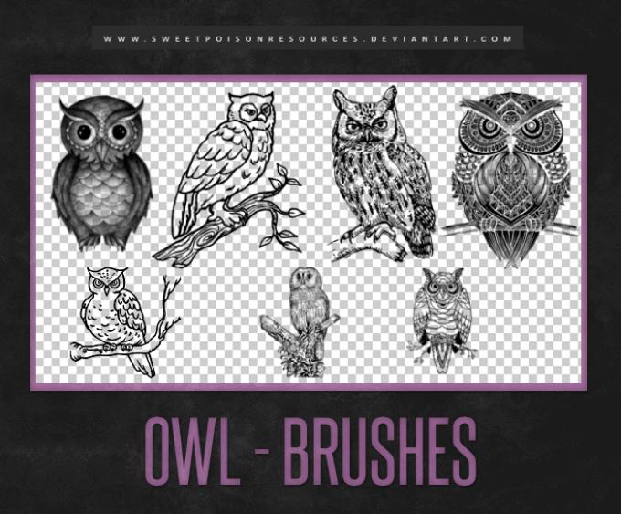 フォトショップ ブラシ Photoshop Bird Brush 無料 イラスト 鳥 バードフォトショップ ブラシ Photoshop Bird Brush 無料 イラスト 鳥 バード フォトショップ ブラシ Photoshop Bird Brush 無料 イラスト 鳥 バード フクロウ Owl Brushes | Photoshop