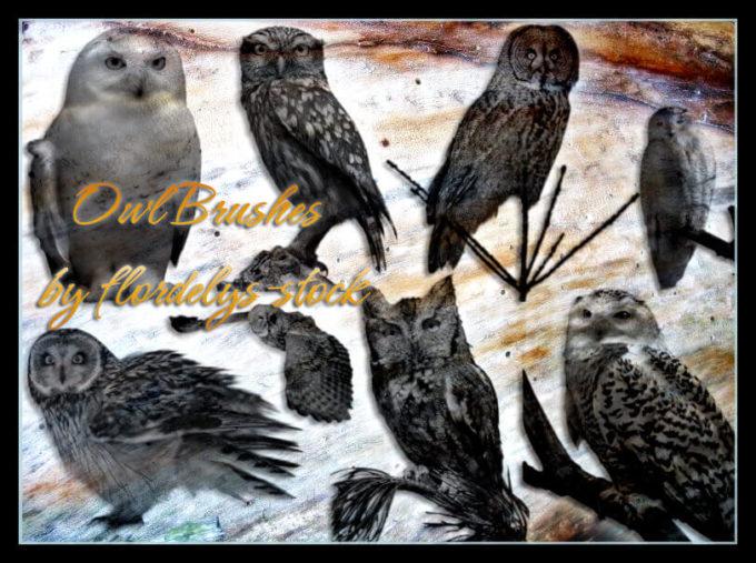 フォトショップ ブラシ Photoshop Owl Brush 無料 イラスト 鳥 バードフォトショップ ブラシ Photoshop Bird Brush 無料 イラスト 鳥 バード フォトショップ ブラシ Photoshop Bird Brush 無料 イラスト 鳥 バード フクロウ Owl Brushes