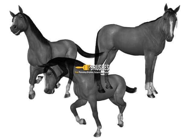 フォトショップ ブラシ Photoshop Horse Brush 無料 イラスト 馬 ホース A Horse is a Horse