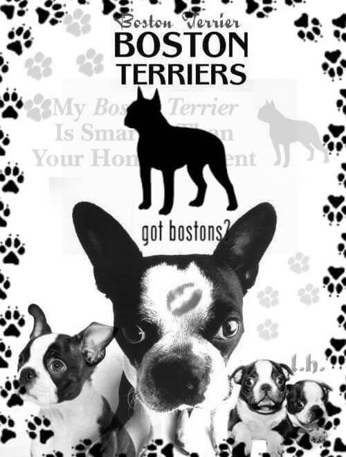 フォトショップ ブラシ Photoshop Dog Brush 無料 イラスト ドッグ 犬 BostonTerrier brushes