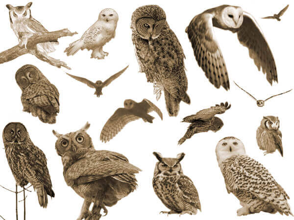 フォトショップ ブラシ Photoshop Owl Brush 無料 イラスト 鳥 バードフォトショップ ブラシ Photoshop Bird Brush 無料 イラスト 鳥 バード フォトショップ ブラシ Photoshop Bird Brush 無料 イラスト 鳥 バード フクロウ Who Gives A Hoot