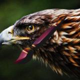 フォトショップ ブラシ 無料 鳥 バード Photoshop Bird Brush Free abr