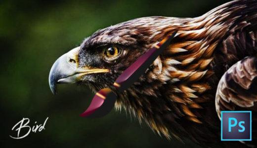 【Photoshop】全て無料!!鳥が描けるブラシセット(.abr)