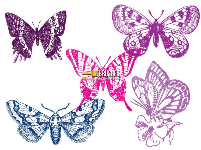 フォトショップ ブラシ Photoshop Butterfly Brush 無料 イラスト 蝶 Butterflies on Display