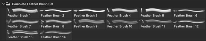 フォトショップ ブラシ Photoshop Bird feather Brush 無料 イラスト 鳥 バード Complete Feather Brush Set