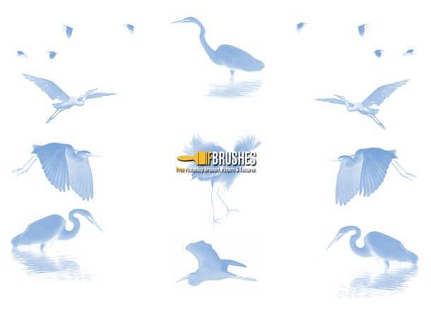 フォトショップ ブラシ Photoshop Bird Brush 無料 イラスト 鳥 バードフォトショップ ブラシ Photoshop Bird Brush 無料 イラスト 鳥 バード フォトショップ ブラシ Photoshop Bird Brush 無料 イラスト 鳥 バード しらさぎ 白鷺 Egrets