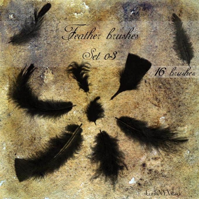 フォトショップ ブラシ Photoshop Bird feather Brush 無料 イラスト 鳥 バード Feather brushes - set 03