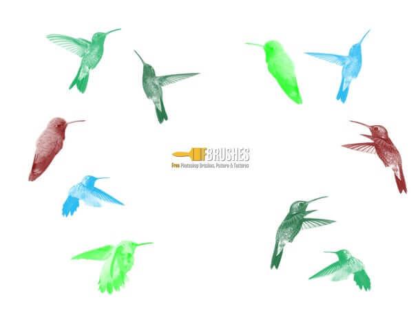 フォトショップ ブラシ Photoshop Bird Brush 無料 イラスト 鳥 バード ハチドリ Hummingbirds