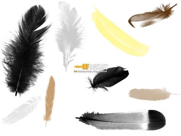 フォトショップ ブラシ Photoshop Bird feather Brush 無料 イラスト 鳥 バード 羽 フェザー Loose Feathers