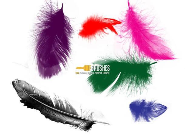 フォトショップ ブラシ Photoshop Bird feather Brush 無料 イラスト 鳥 バード Loose Floating Feathers