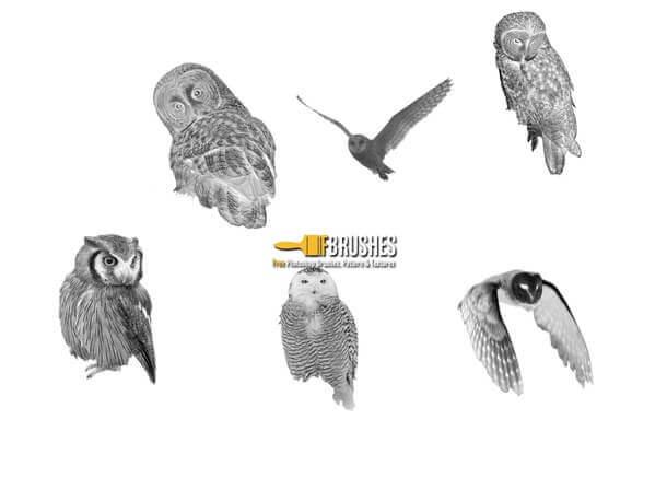フォトショップ ブラシ Photoshop Bird Brush 無料 イラスト 鳥 バードフォトショップ ブラシ Photoshop Bird Brush 無料 イラスト 鳥 バード フォトショップ ブラシ Photoshop Bird Brush 無料 イラスト 鳥 バード フクロウ Mr-Owl