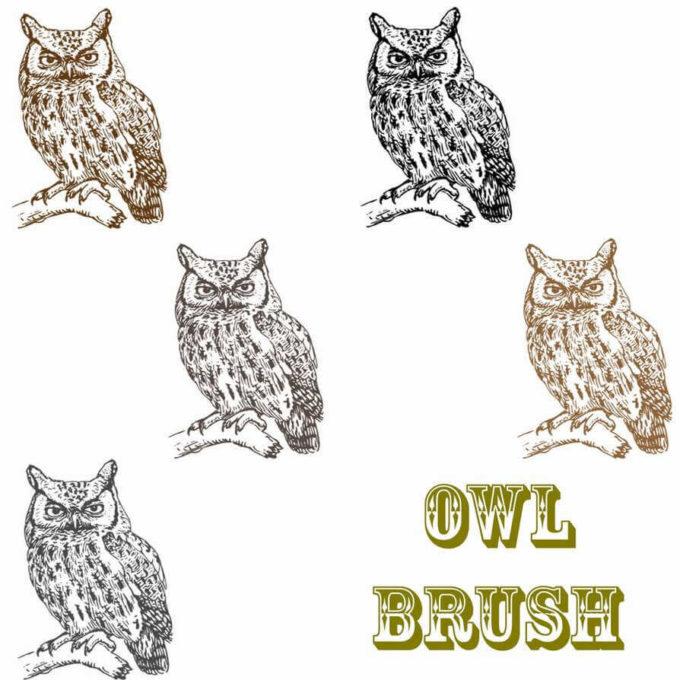 フォトショップ ブラシ Photoshop Bird Brush 無料 イラスト 鳥 バードフォトショップ ブラシ Photoshop Bird Brush 無料 イラスト 鳥 バード フォトショップ ブラシ Photoshop Bird Brush 無料 イラスト 鳥 バード フクロウ Owl Brush