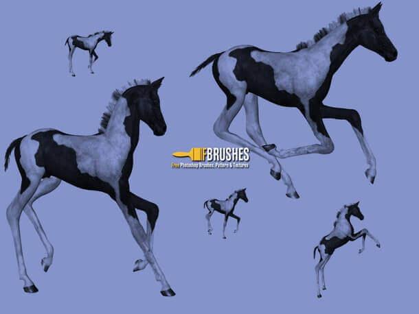 フォトショップ ブラシ Photoshop Horse Brush 無料 イラスト 馬 ホース ポニー Pony
