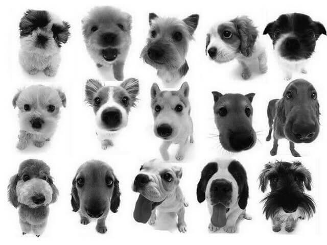 フォトショップ ブラシ Photoshop Dog Brush 無料 イラスト ドッグ 犬 puppy brushes