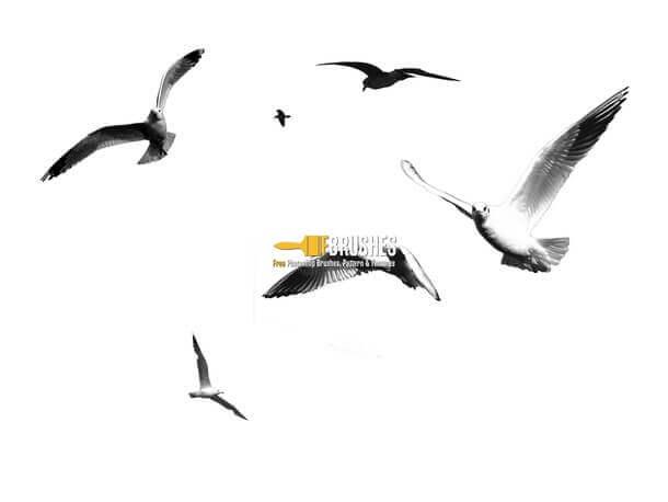 フォトショップ ブラシ Photoshop Bird feather Brush 無料 イラスト 鳥 バード カモメ かもめ Seagulls
