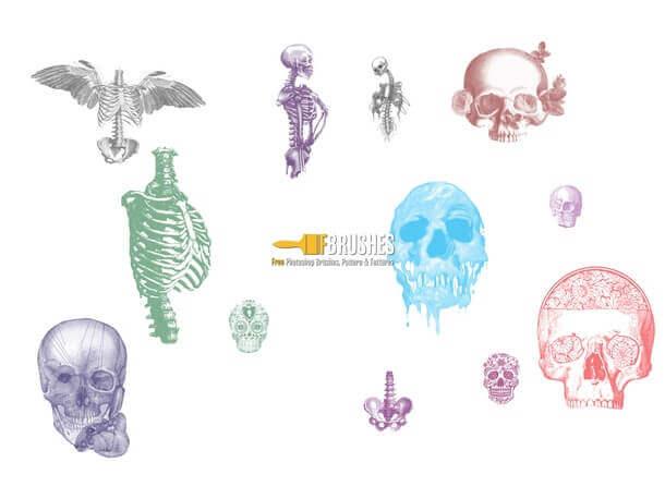 フォトショップ ブラシ Photoshop Skeleton Brush 無料 イラスト スカル 骸骨 ガイコツ スケルトン  Skulls and Bones