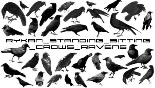 フォトショップ ブラシ Photoshop Raven Brush 無料 イラスト 鳥 バード カラス レイバン Standing_Crows_Raven brushes