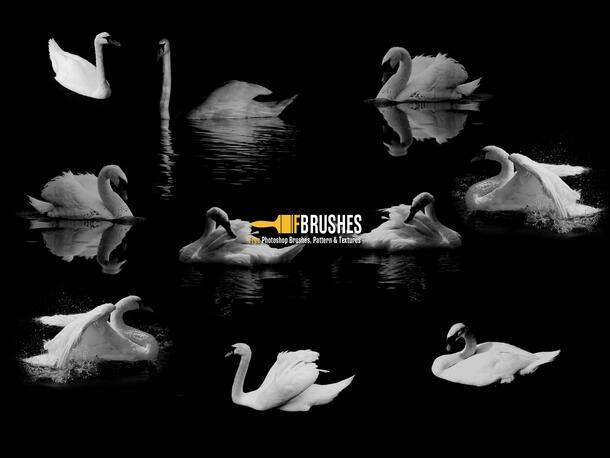 フォトショップ ブラシ Photoshop Bird Brush 無料 イラスト 鳥 バードフォトショップ ブラシ Photoshop Bird Brush 無料 イラスト 鳥 バード フォトショップ ブラシ Photoshop Bird Brush 無料 イラスト 鳥 バード 白鳥 Swan Princess