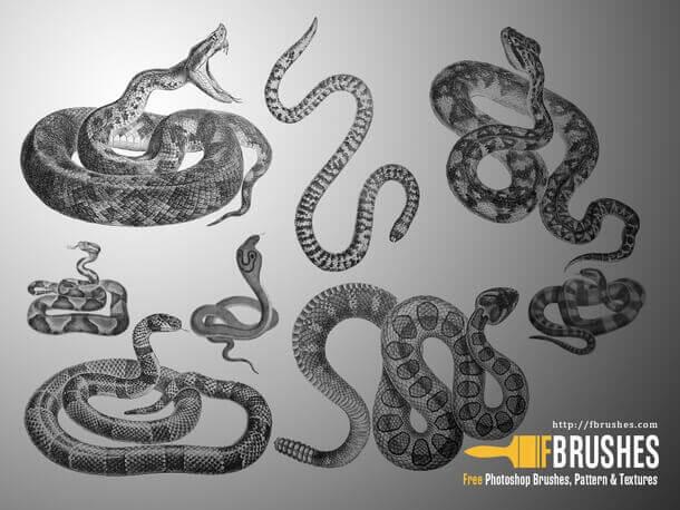フォトショップ ブラシ Photoshop Tattoo Brush Free abr 無料 イラスト タトゥー 模様 柄 刺青 蛇 ヘビ スネーク Snakes