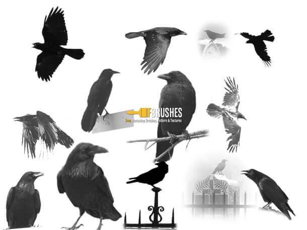 フォトショップ ブラシ Photoshop Bird Brush 無料 イラスト 鳥 バードフォトショップ ブラシ Photoshop Bird Brush 無料 イラスト 鳥 バード フォトショップ ブラシ Photoshop Bird Brush 無料 イラスト 鳥 バード The Blackbirds