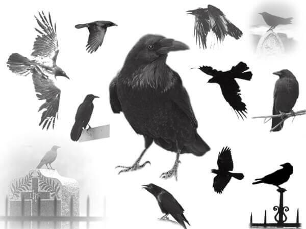 フォトショップ ブラシ Photoshop Raven Brush 無料 イラスト 鳥 バード カラス レイバン The Raven_s