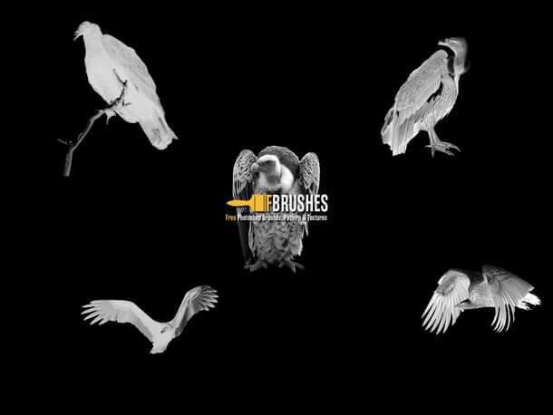 フォトショップ ブラシ Photoshop Bird Brush 無料 イラスト 鳥 バードフォトショップ ブラシ Photoshop Bird Brush 無料 イラスト 鳥 バード フォトショップ ブラシ Photoshop Bird Brush 無料 イラスト 鳥 バード はげたか ハゲタカ Vultures