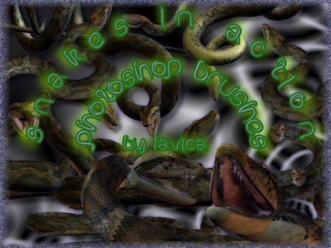 フォトショップ ブラシ Photoshop Snake Brush 無料 イラスト 蛇 ヘビ へび スネーク Snake Brushes