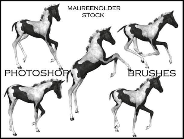 フォトショップ ブラシ Photoshop Horse Brush 無料 イラスト 馬 ホース STOCK PHOTOSHOP BRUSH foal