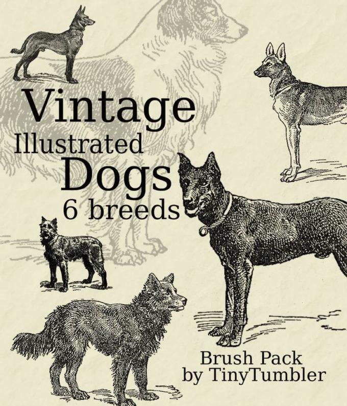フォトショップ ブラシ Photoshop Dog Brush 無料 イラスト ドッグ 犬 Vintage Illust. Dogs Brushpack